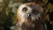 Owl_122014